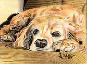 dog drawing artwork pet art pets animals love best home