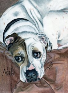 dog art pet art pet artist love pastel drawing 8x10 acid-free home