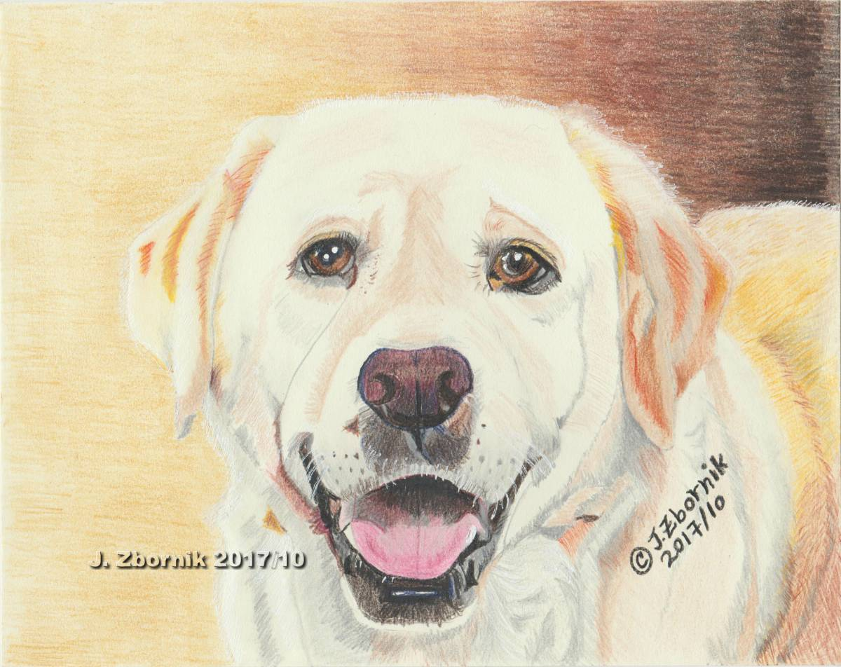 Dog Dog Art Pet Art Artwork Animal Animals